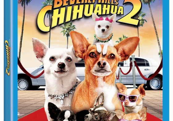 BeveryHillChihuahuaTwoBlurayComboArt1-1