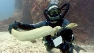 Sea-snake640