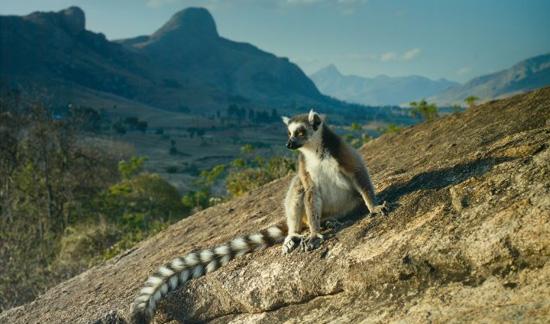 Lemurs_madagascar