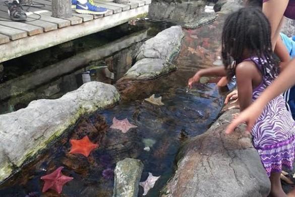 Cabrillo-aquarium