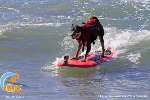 Dog-Surf-2-495x330