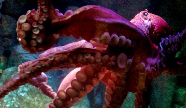 carmel-monterey-aquarium