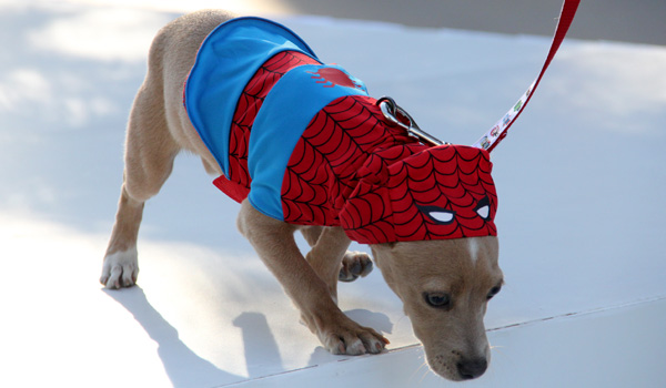 disney-store-spider-man-dog