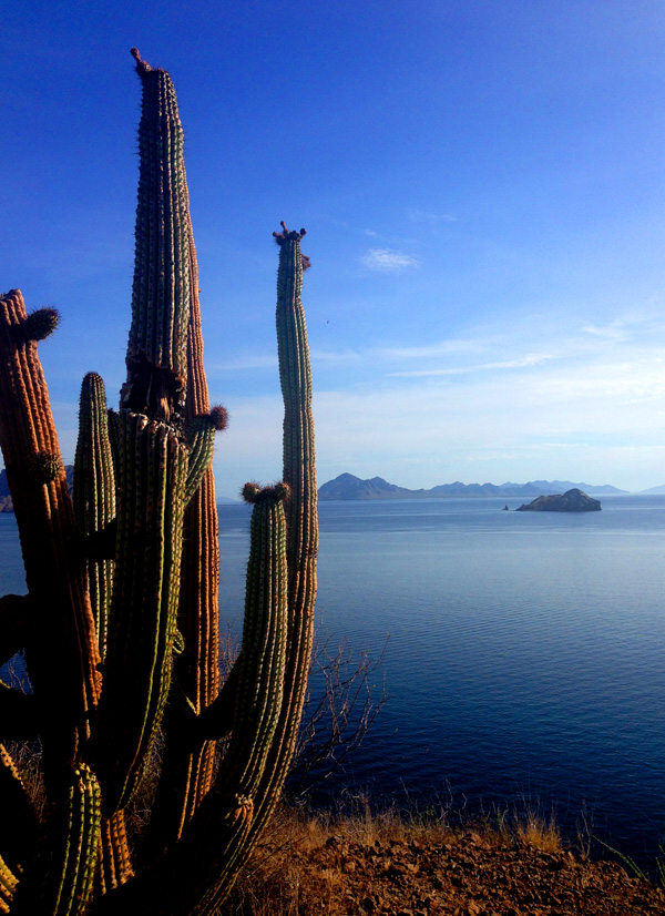Villa del Palmar at the Islands of Loreto, family travel Loreto, Family travel baja california, Loreto, hotels in loreto, resorts in loreto, best pools resorts, nature hikes loreto