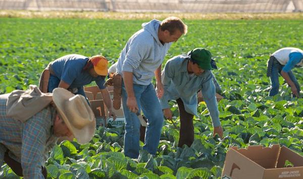mcfarland-farmers