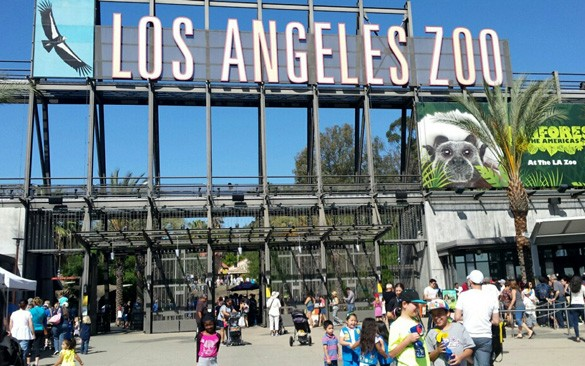 los-angeles-zoo-paddington
