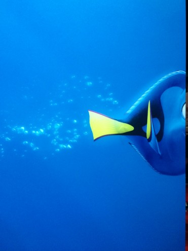 d23_findingdory2