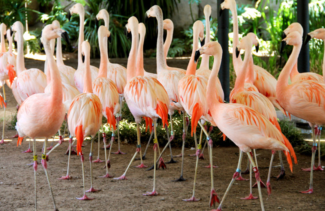 verizon-flamingos-zoo