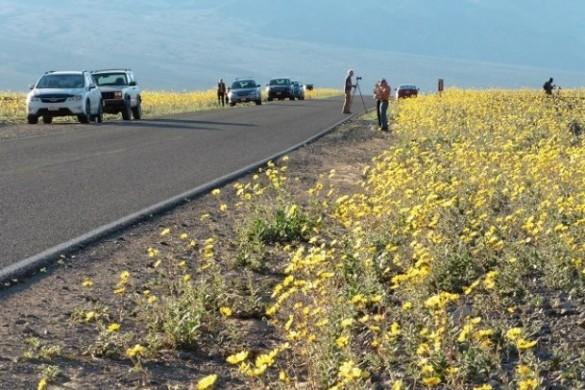 Super Bloom, Death Valley