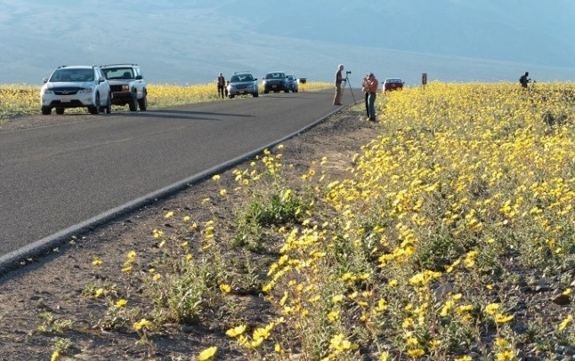 Super Bloom, Death Valley
