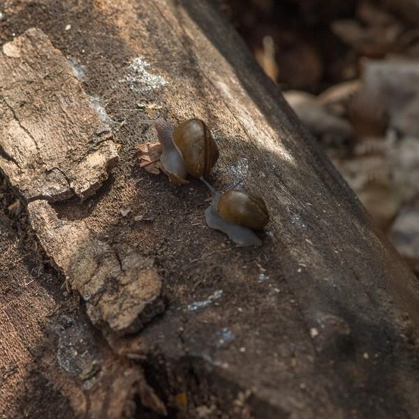 snailblitz-9400