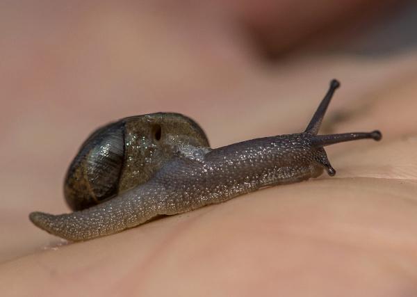 snailblitz_closeup