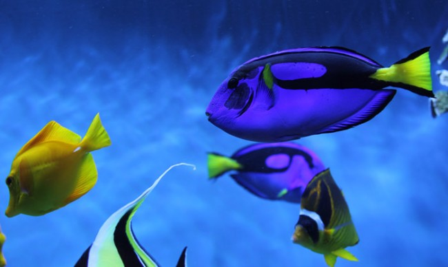 finding-dory-fang