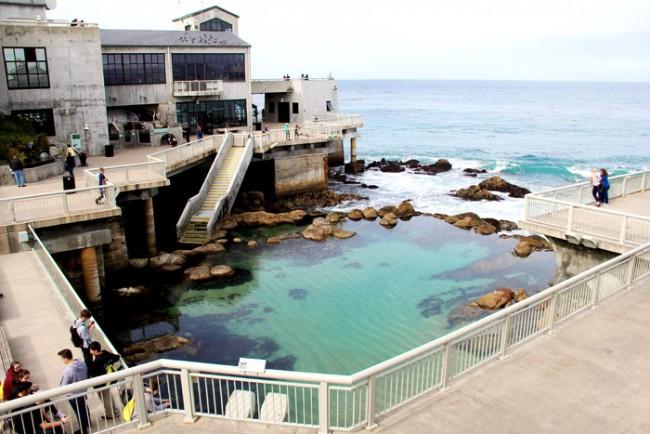 monterey-aquarium-dory-3