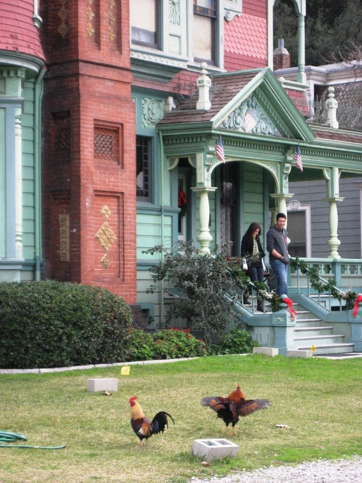 Heritage Sq chickens