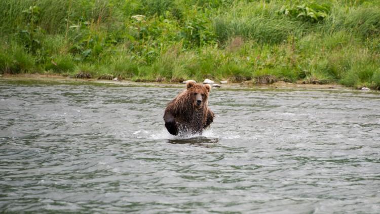 Wild Alaska Live, Wild Kratts