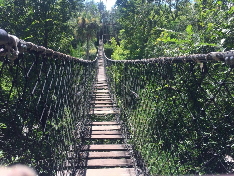 wild africa trek bridge