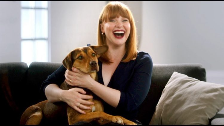 Bryce Dallas Howard Voices Bella Star Of A Dog S Journey