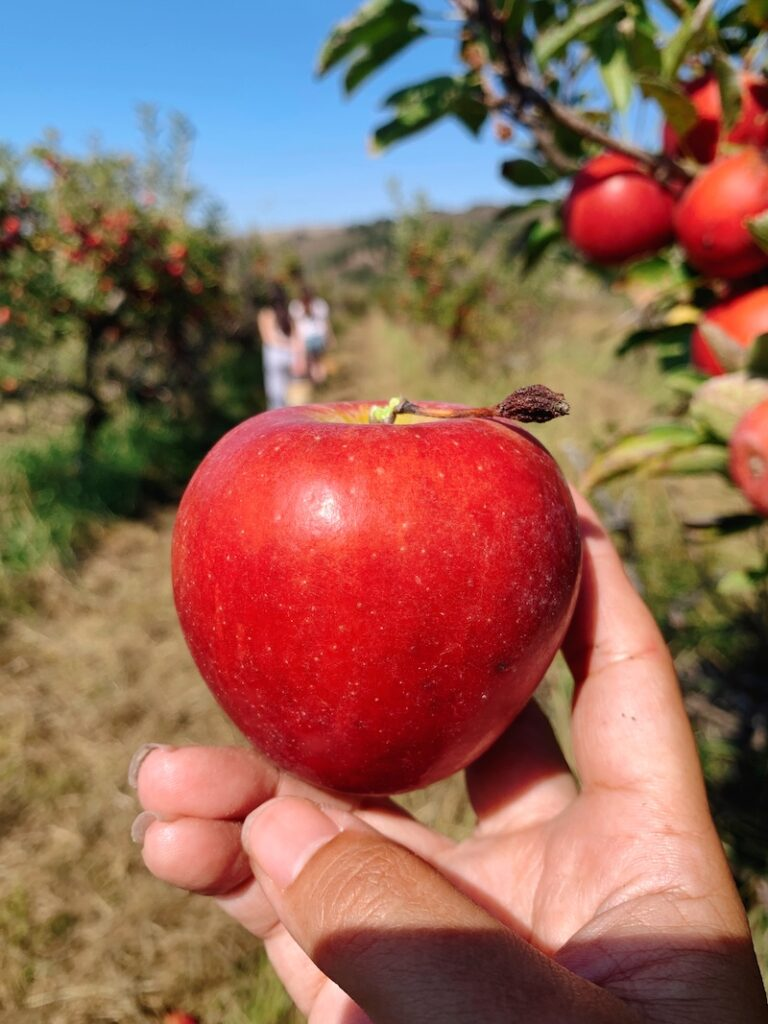 things to do in autumn, apple picking