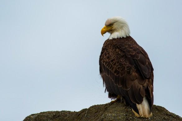wild alaska live, wild kratts alaska, nature pbs
