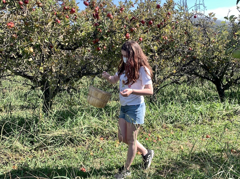 apple picking, things to do in autumn